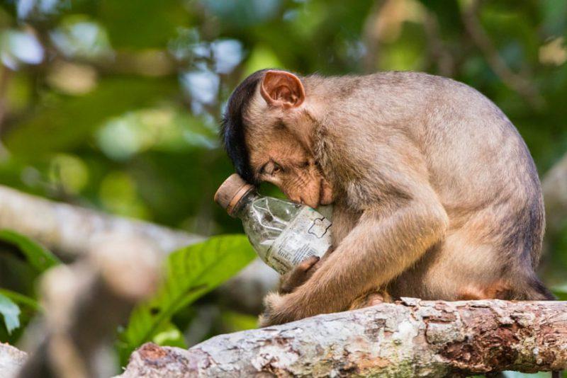 Perierga.gr - Οι καλύτερες περιβαλλοντικές φωτογραφίες για το 2018