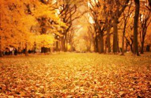 Perierga.gr - Έρχεται και επίσημα το Φθινόπωρο την Κυριακή