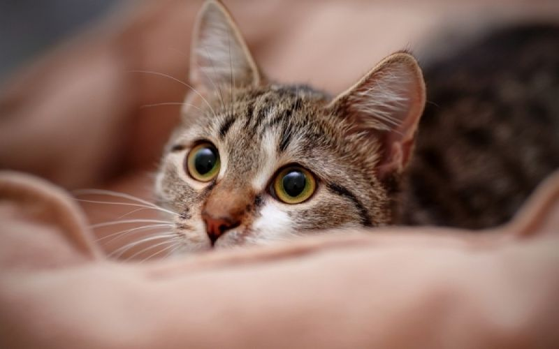 Perierga.gr - Πράγματα για τις γάτες που θα σας εντυπωσιάσουν