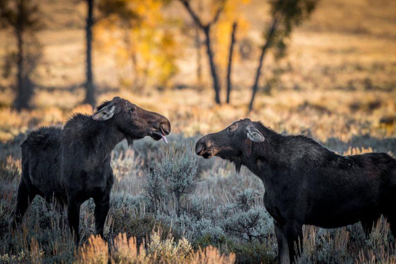 Perierga.gr - Βραβεία κωμικής φωτογραφίας άγριας ζωής 2018