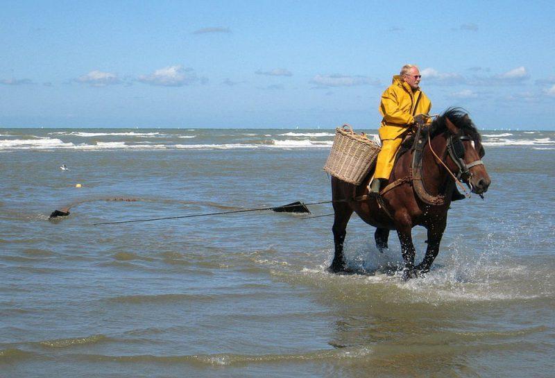 Perierga.gr - Το ψάρεμα γίνεται με άλογα...