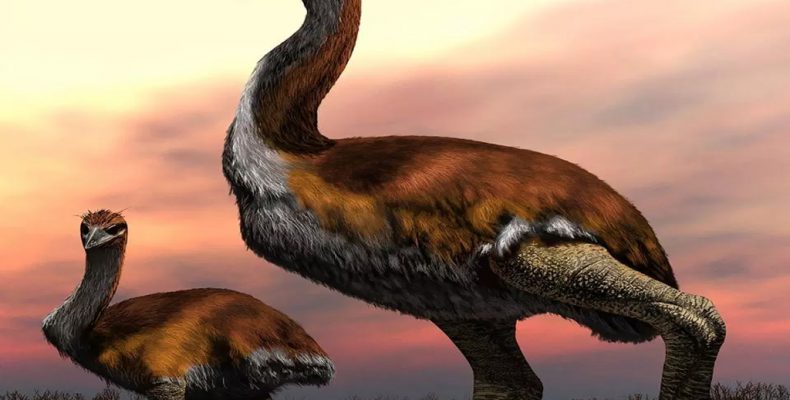 Perierga.gr - Το μεγαλύτερο πουλί που έζησε ποτέ στη Γη