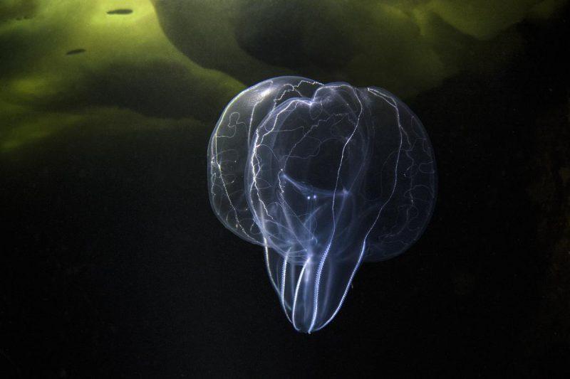Perierga.gr - Τα ασυνήθιστα θαλάσσια πλάσματα της Λευκής Θάλασσας