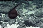 Perierga.gr - Χέλι αλλάζει μέγεθος σε δευτερόλεπτα
