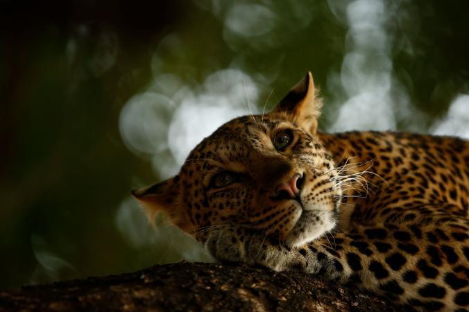 "Perierga.gr - Οι πιο εντυπωσιακές φωτογραφίες ""Άγριας Ζωής"" για το 2018"