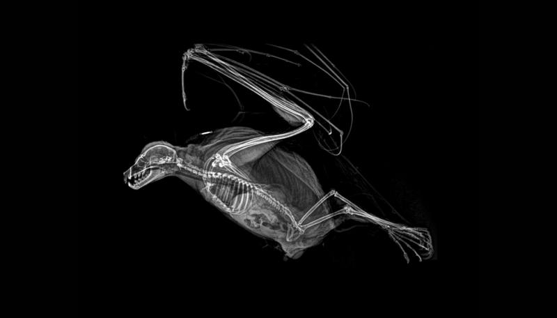 Perierga.gr - Πώς μοιάζουν τα ζώα μέσα από ακτινογραφίες!