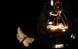 Perierga.gr - Γιατί τα έντομα πάνε στις λάμπες;