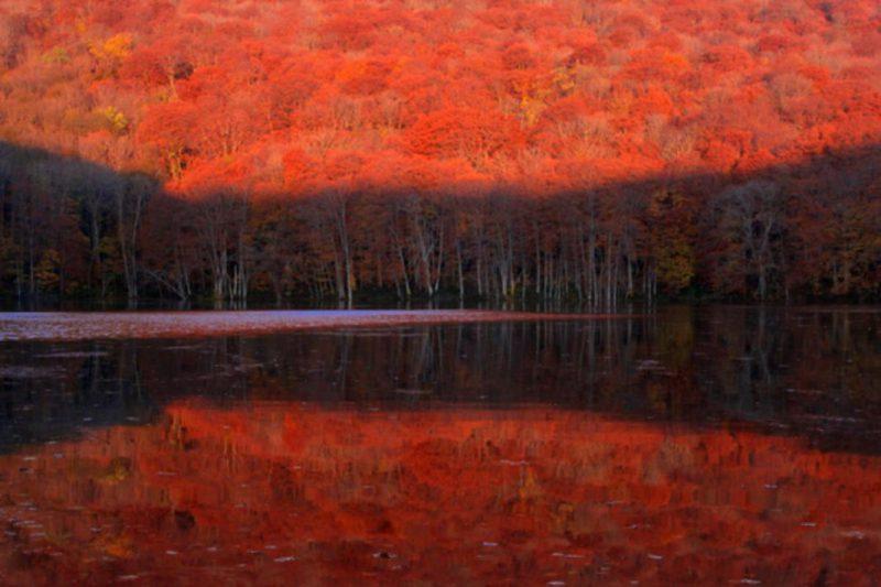 Perierga.gr - Τα χρώματα του φθινοπώρου...