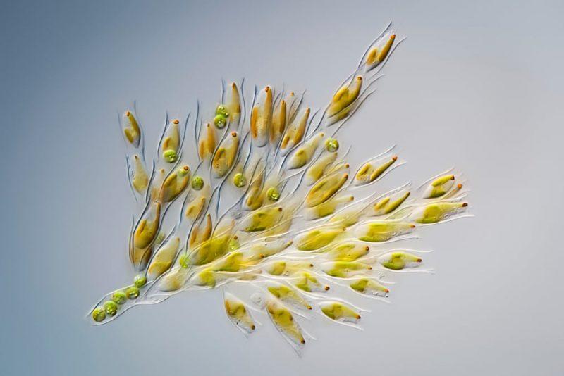 "Perierga.gr - Διαγωνισμός φωτογραφίας ""Σχηματισμοί της Φύσης"""