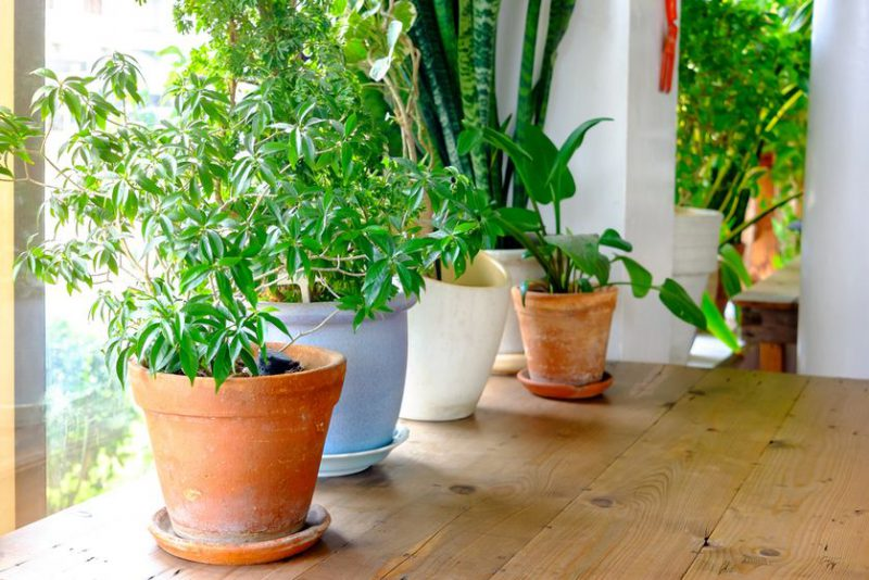 Perierga.gr - Πόσο καθαρός είναι ο αέρας μέσα στο σπίτι μας;