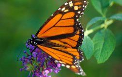 Perierga.gr - Μια πεταλούδα γεννιέται...