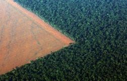 Perierga.gr - Συναγερμός στον Αμαζόνιο: Σε ένα χρόνο εξαφανίστηκε δάσος πέντε φορές μεγαλύτερο από το Λονδίνο