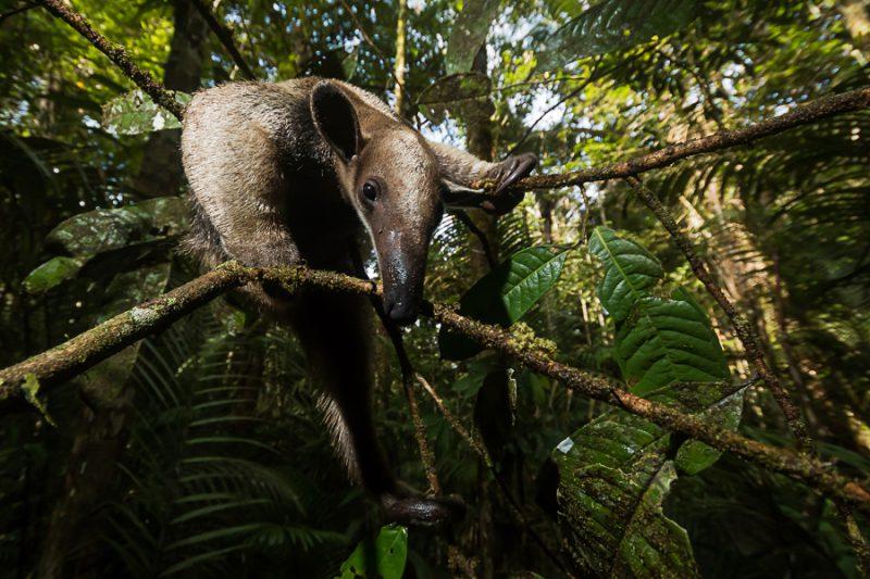"Perierga.gr - Οι βραβευμένες φωτογραφίες του διαγωνισμού ""British Ecological Society"""