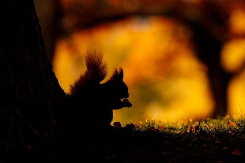 Perierga.gr - Βραβεία φωτογραφίας της άγριας ζωής της Βρετανίας