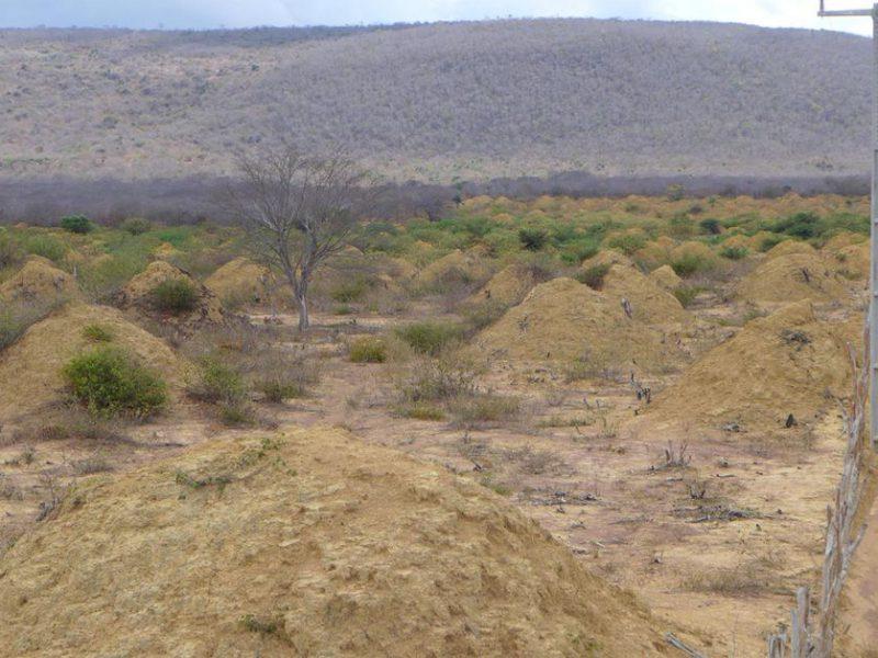 Perierga.gr - Εντυπωσιακοί κώνοι φτιάχτηκαν από τερμίτες σε 4.000 χρόνια