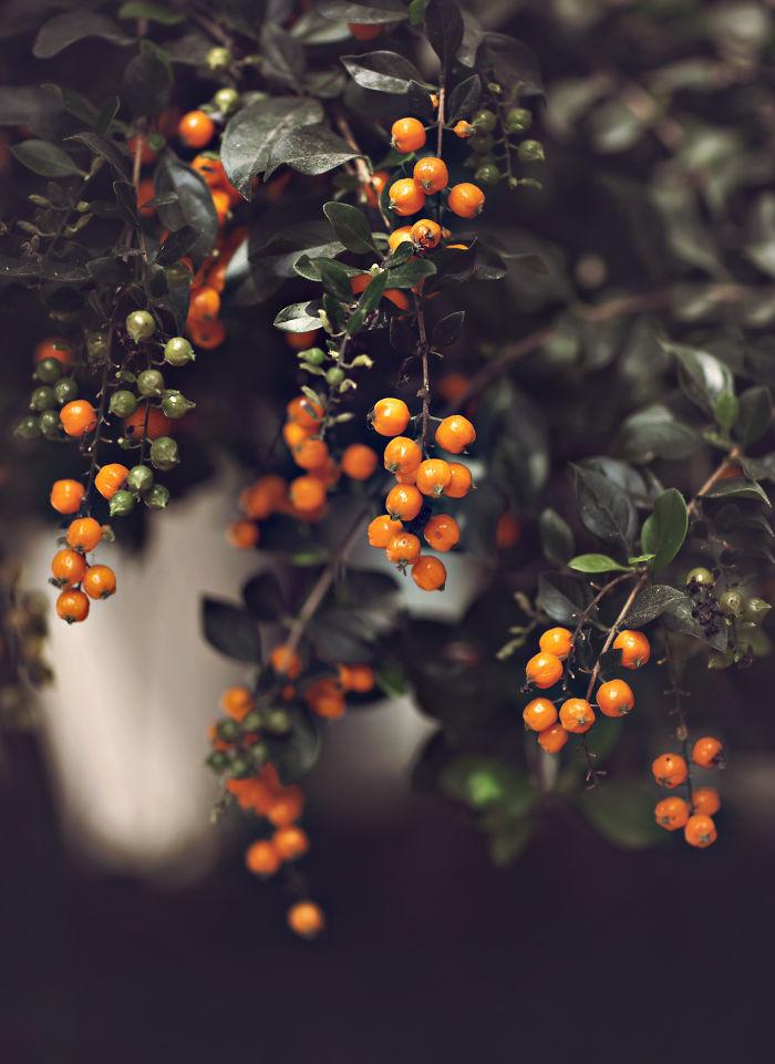 Perierga.gr - Όμορφες και λεπτομερείς φωτογραφίες φυτών