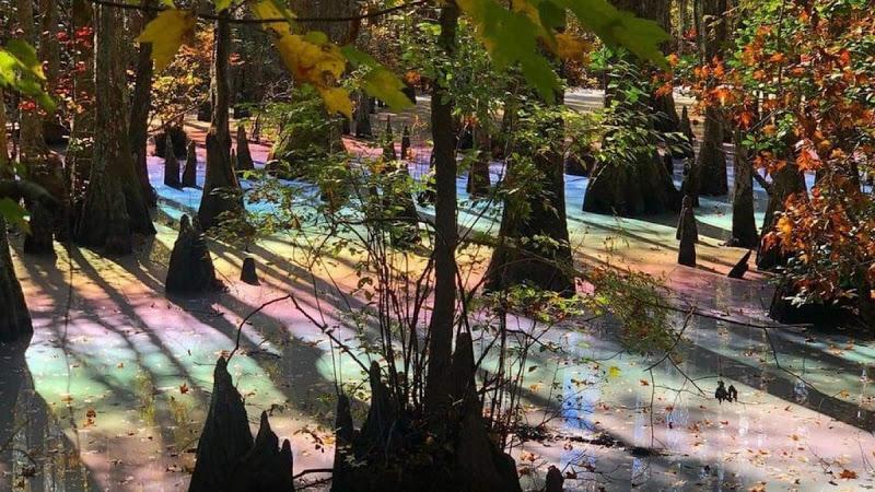 Perierga.gr - Ουράνιο τόξο εμφανίστηκε σε νερά βάλτου