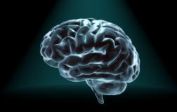 Perierga.gr - Εντυπωσιακά στοιχεία για τον ανθρώπινο εγκέφαλο