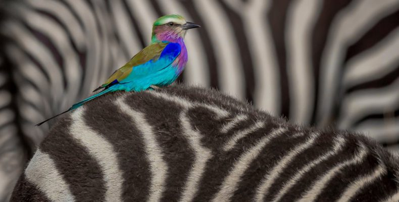 Perierga.gr - Οι κορυφαίες φωτογραφίες άγριας ζωής για το 2018 από τον Guardian