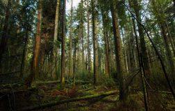 Perierga.gr - Φύτεψε 5 εκατομμύρια δέντρα σε όλη του τη ζωή!