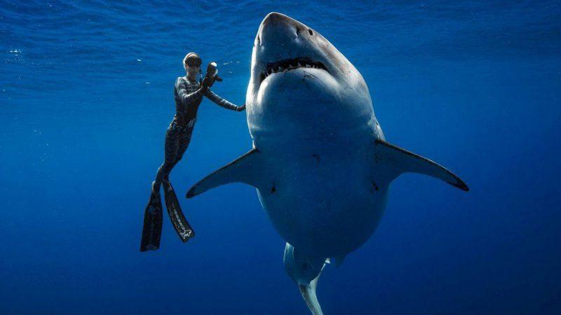 Perierga.gr - Δύτες κολύμπησαν πλάι σε έναν από τους μεγαλύτερους καρχαρίες που έχει καταγραφεί
