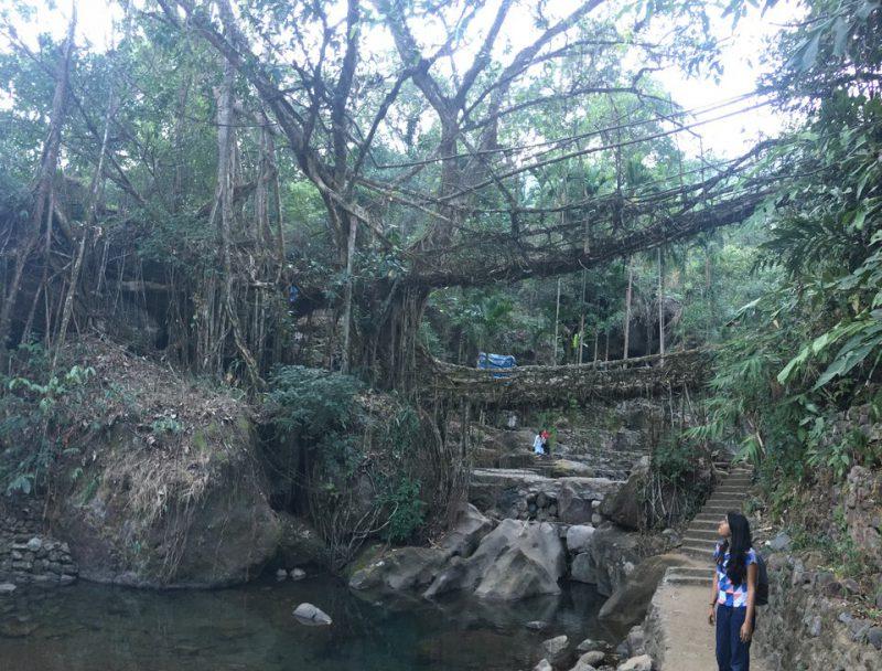 Perierga.gr - Γέφυρες από ρίζες δέντρων που... ζουν για αιώνες