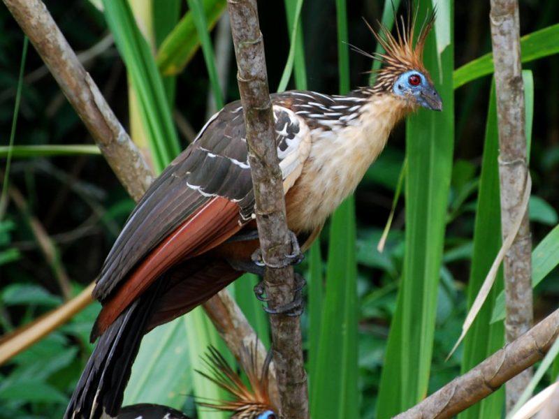 Perierga.gr - Περίεργα στοιχεία για τα πουλιά!