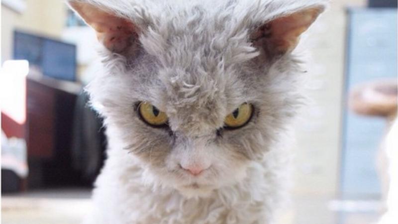 Perierga.gr - Η πιο... θυμωμένη γάτα του διαδικτύου!