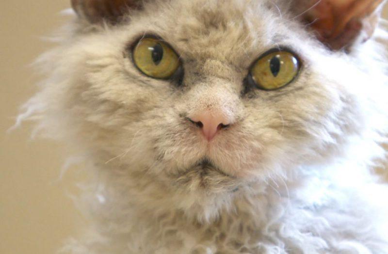 3f977c625484 περίεργη γάτα