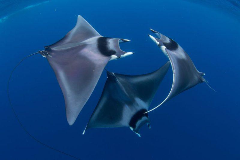 Perierga.gr - Εντυπωσιακές υποβρύχιες λήψεις στον διαγωνισμό Art Underwater Photo
