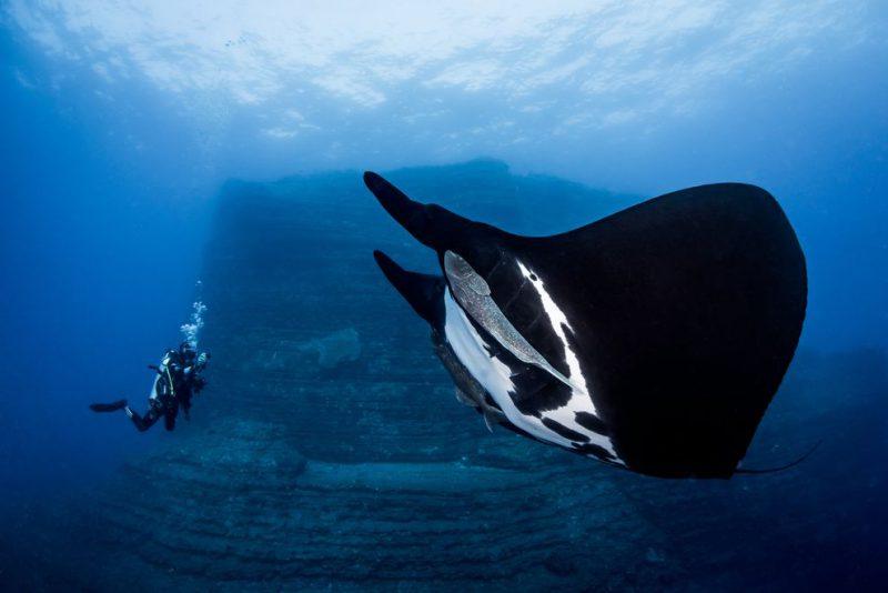 Perierga.gr - Εντυπωσιακές υποβρύχιες λήψεις που διακρίθηκαν στον διαγωνισμό Art Underwater Photo