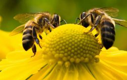 Perierga.gr - Οι μέλισσες ξέρουν μαθηματικά και κάνουν πράξεις