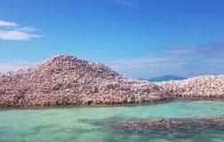 Perierga.gr - Ένα... νησί από κοχύλια
