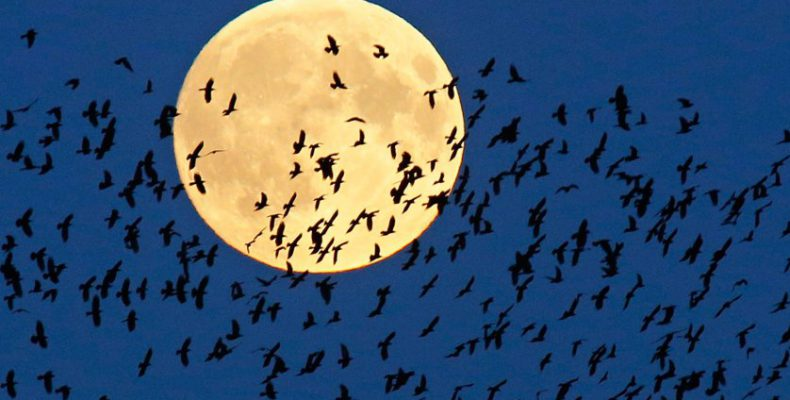 Perierga.gr - Σήμερα το απόγευμα η δεύτερη Υπερ-Σελήνη για το 2019