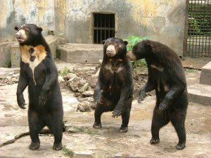 Perierga.gr - Αρκούδες... ταλέντα στις μιμήσεις!