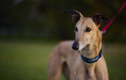 Perierga.gr - Ο γρηγορότερος σκύλος στον κόσμο