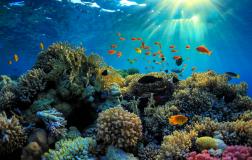 Perierga.gr - Ο πρώτος κοραλλιογενής ύφαλος στη Μεσόγειο εντοπίστηκε στην Ιταλία