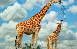 Perierga.gr - Περίπου 1.700 είδη πτηνών και ζώων κινδυνεύουν με εξαφάνιση τα επόμενα 50 χρόνια