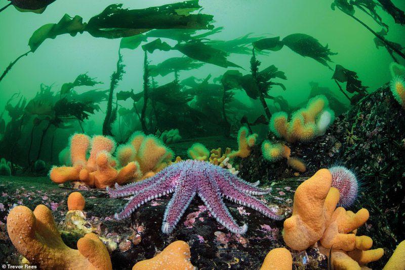 Perierga.gr - Θεαματικές φωτογραφίες του διαγωνισμού British Wildlife Photography