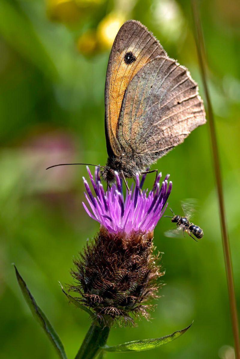 Perierga.gr - Μια πεταλούδα με διάφανα φτερά στις καλύτερες φωτογραφίες με θέμα την Οικολογία