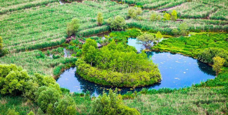Perierga.gr - Δέντρα και φυτά επιπλέουν στο νερό σαν πλωτά νησάκια!