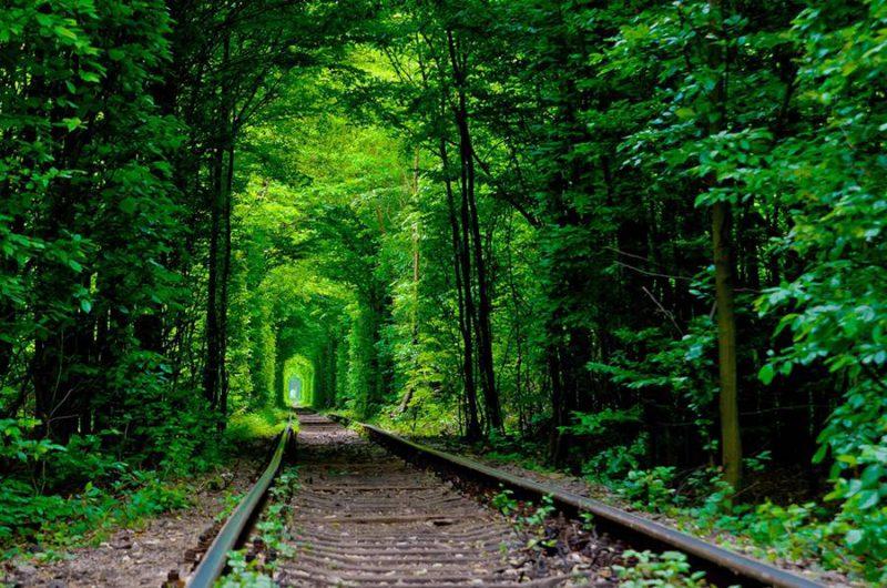 Perierga.gr - Φυσικά τούνελ από δέντρα