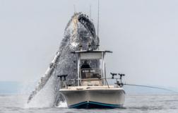 Perierga.gr - Ψαράς με τη βάρκα του... στη σκιά μιας τεράστιας φάλαινας!