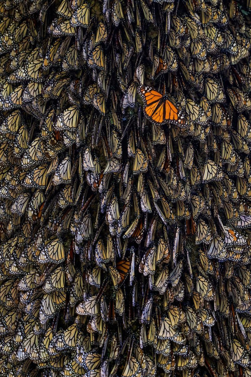 Perierga.gr - Οι φιναλίστ του διαγωνισμού φωτογραφίας του National Geographic