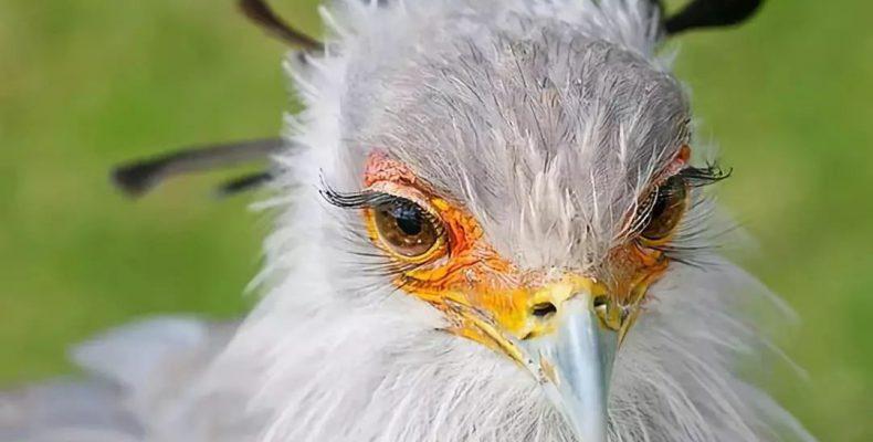 Perierga.gr - Ένα πτηνό που ξεχωρίζει για τις βλεφαρίδες του!