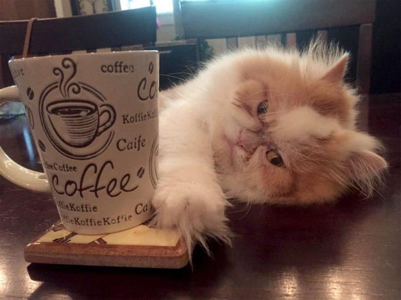 Perierga.gr - Γάτα με μόνιμα θυμωμένο πρόσωπο