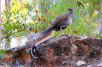 Perierga.gr - Το πτηνό που μιμείται μέχρι και 20 ήχους για να δημιουργήσει το δικό του κελάηδισμα