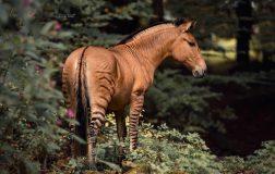 Perierga.gr - Μισή ζέβρα μισό άλογο... ένα πανέμορφο υβρίδιο ζώου