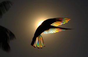 Perierga.gr - Ο ήλιος δίνει χρώμα ουράνιου τόξου στα φτερά πτηνού