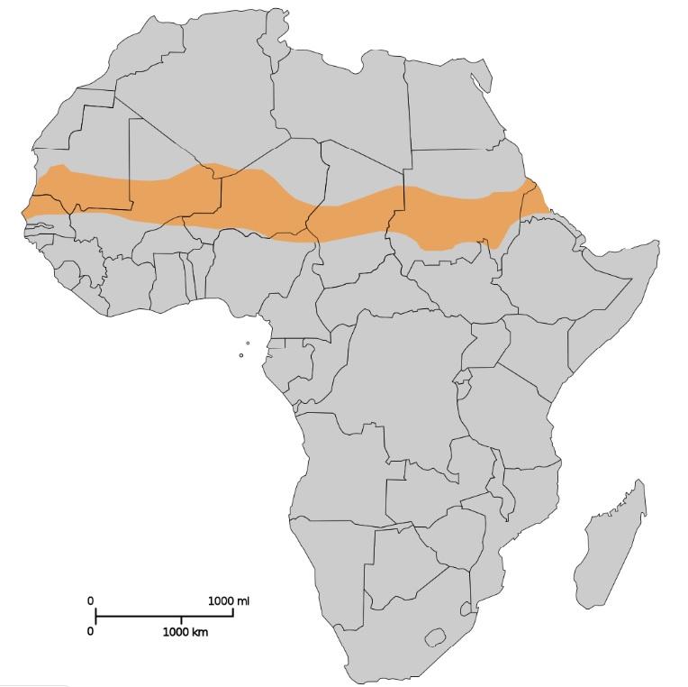 Μεγάλο Πράσινο Τείχος: 20 χώρες της Αφρικής σχεδιάζουν να φυτέψουν 200 εκ. δέντρα
